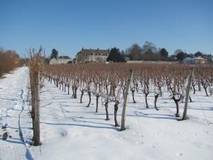 Vines snow