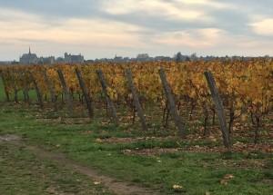 Vines autumn