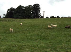 sheep-geese-victory