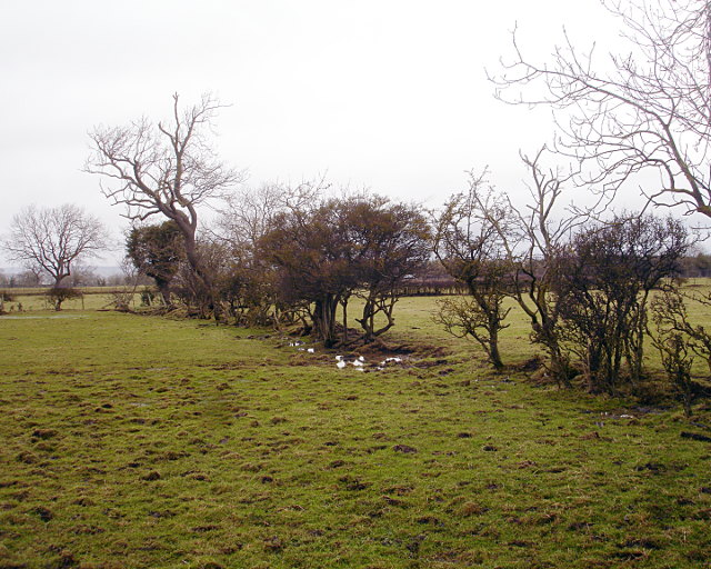 decaying_hedge_-_geograph-org-uk_-_1715089