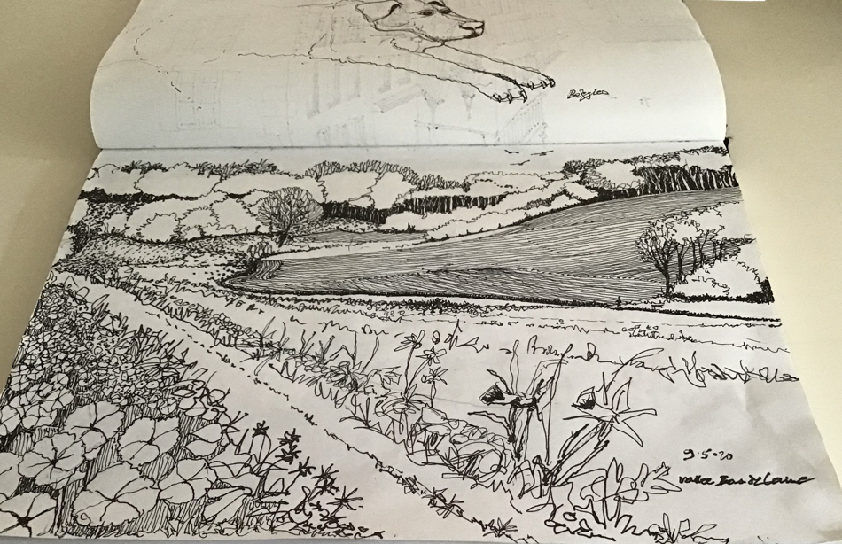 Valley and track from the garden